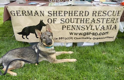 German Shepard Rescue of Southern Pennsylvania