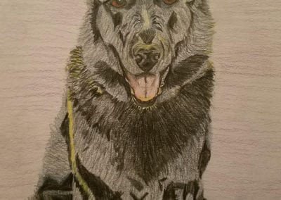 """Reese"" in Colored Pencil by Kim Blaney"