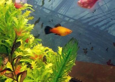 Gold & Tropical Fish