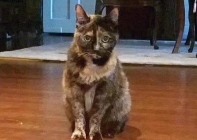 Puma the Cat